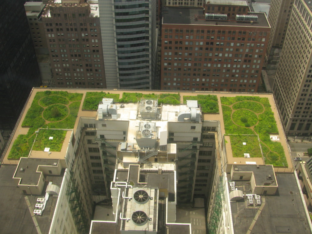 Chicago City Hall Green Roof / Antonio Vernon / commons.wikipedia.org
