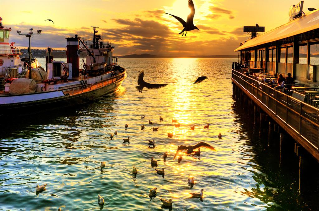 Golden Bird Dance / Jason Hoover / flickr.com
