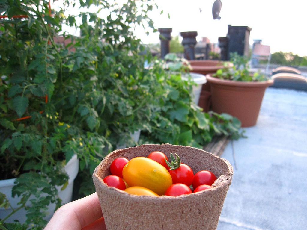 Roof top garden / Marie Viljoen / flickr.com